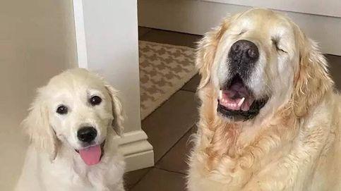 La historia del perro ciego que cuenta con la ayuda de un cachorro que le sirve como guía