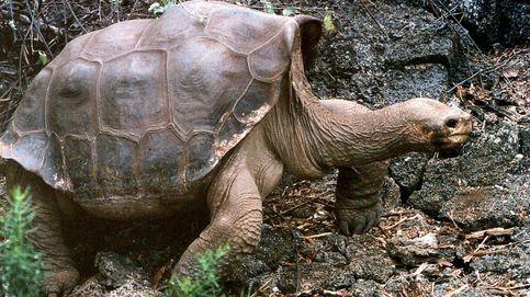 Liberadas 27 tortugas Galápagos de unos traficantes de animales peruanos