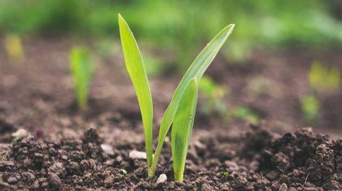 Un biofertilizante español reduce hasta un 60% las necesidades vegetales
