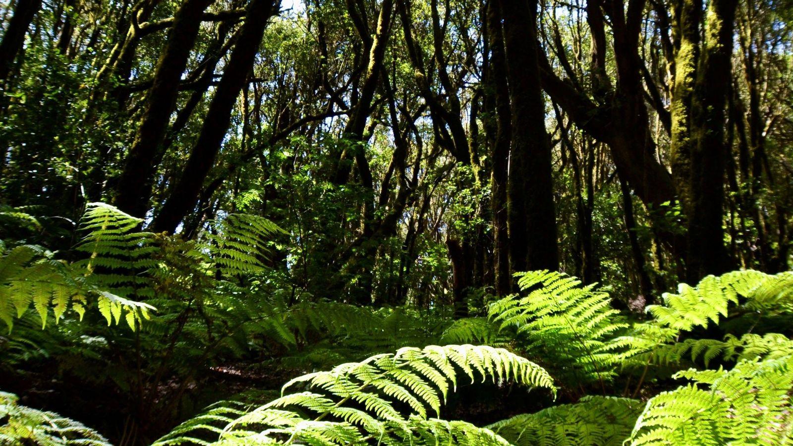 Bosques más jóvenes y bajos: consecuencias de la tala masiva y del cambio climático