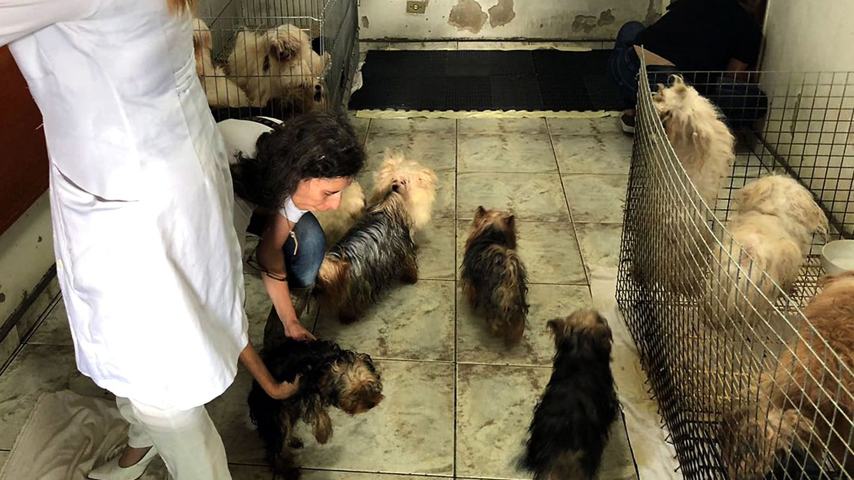 Una mujer es sancionada por tener 13 perros en condiciones lamentables en su patio