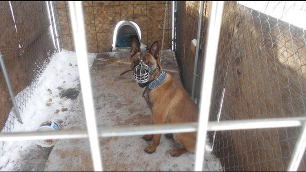 Acusado de maltrato por dejar a su perro a -20 grados en pleno temporal en EEUU