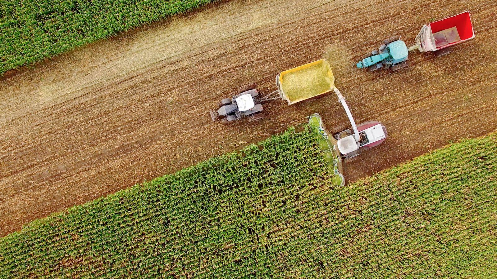 Foto: La calidad de la cosecha no es lo único que determina su precio. (iStock)