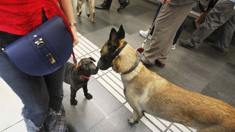 Un municipio de Mallorca cobrará un impuesto de 10 euros por tener perro