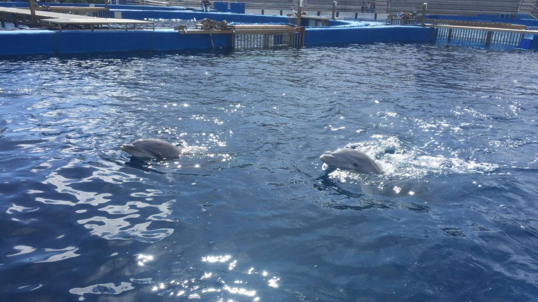 Dos delfines mulares en las instalaciones del centro valenciano (A.V.)