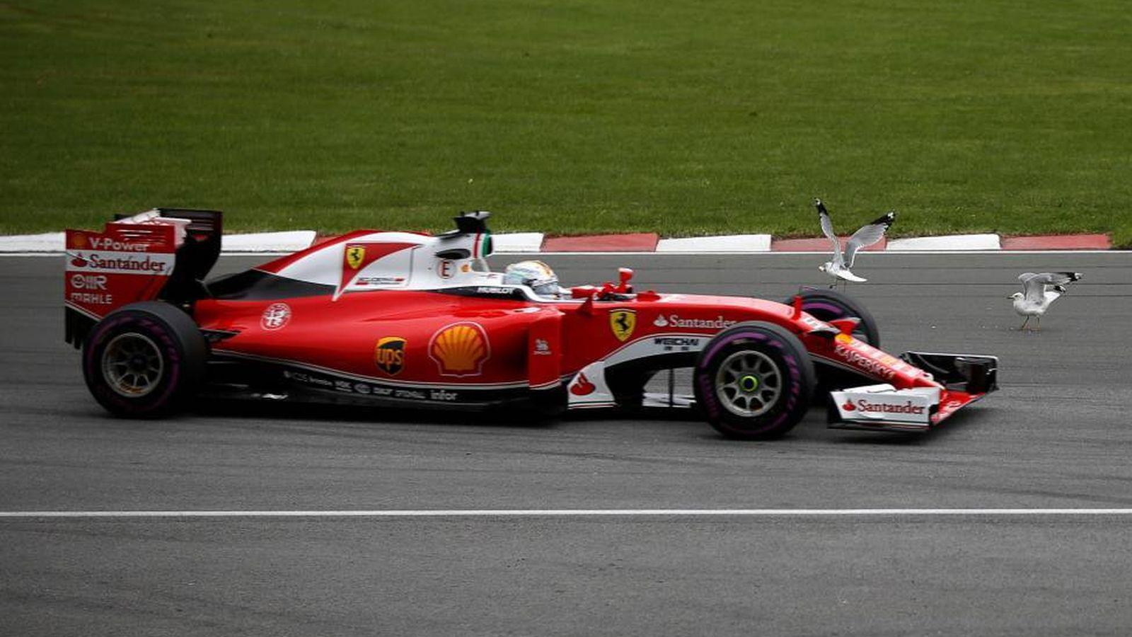 Foto: Muchos animales han creado momentos de tensión en la pista. (Reuters)