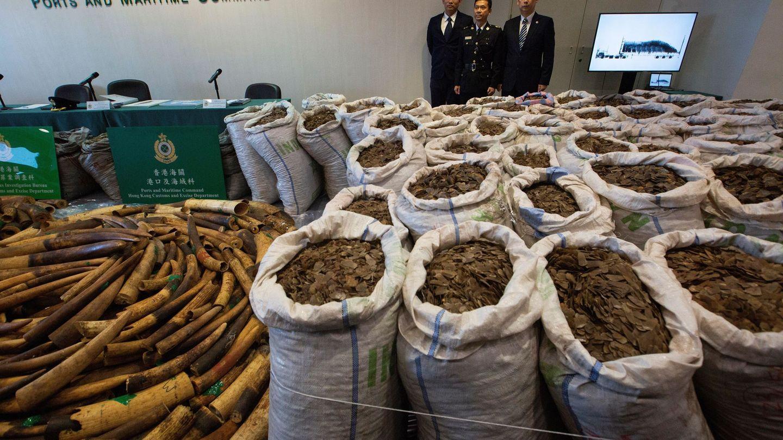 El servicio de Aduanas de Hong Kong presenta al público un alijo de varias toneladas de escamas de pangolín. (EFE)
