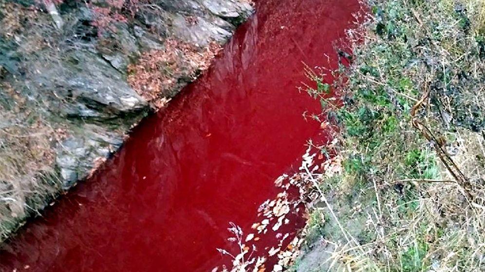 Foto: La imagen de la sangre que llegó al río Imjin, tiñéndolo de rojo, es dantesca (Foto: Yeoncheon Imjin River Civic Network)