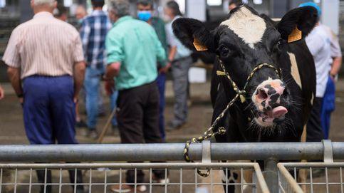 Cómo se compra una vaca