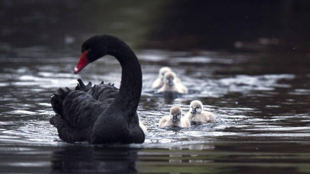 Foto: Société Générale avisa: no pierdas de vista estos cisnes negros