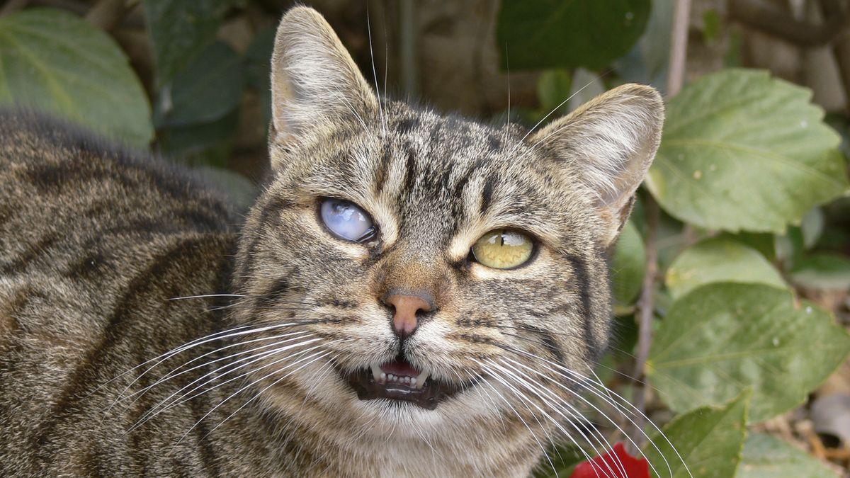 Salud La Verdad Sobre El Peligroso Parásito Que Te Pueden Contagiar Los Gatos