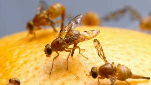Hackear la maduración de insectos para evitar el Zika o el paludismo