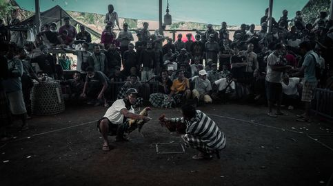 Sangre y cuchillas en la arena: el milenario negocio y rito de las peleas de gallos en Bali