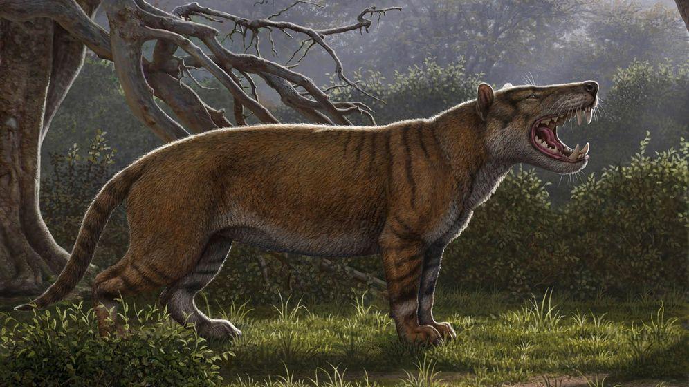 Foto: Reconstrucción facilitada por el Museo Nacional de Nairobi, de una nueva especie de mamífero gigante que pobló la Tierra hace unos 22 millones de años. (EFE)