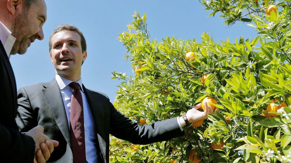 Foto: Pablo Casado en un acto electoral. (EFE)