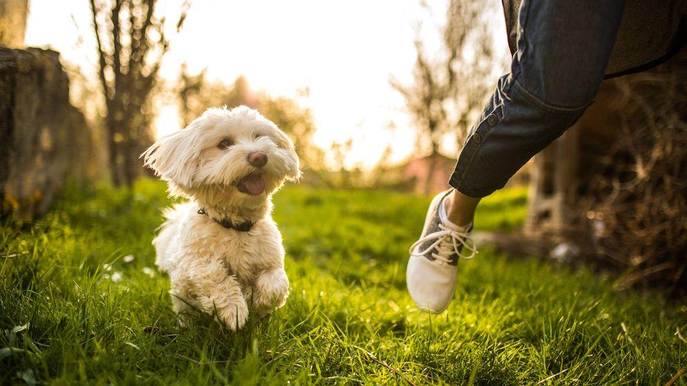 ¿Por qué los perros nos siguen a todos lados? Estos son los verdaderos motivos