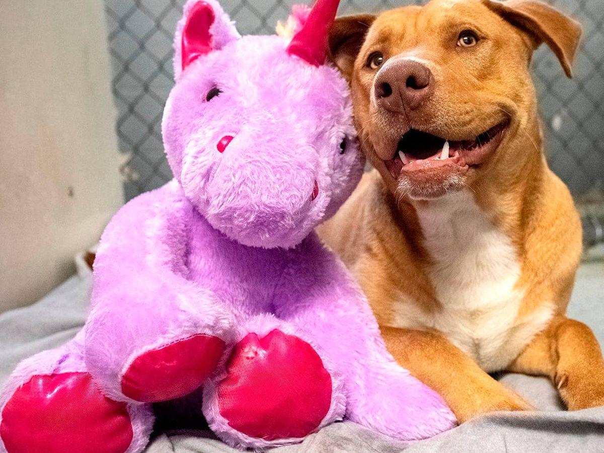 Foto: Sisu junto al unicornio del que se enamoró y que le ha cambiado la vida (Duplin County Animal Services)