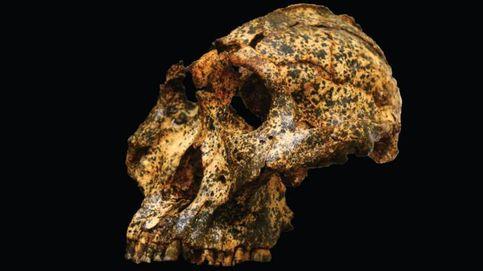 Un cráneo de más de dos millones de años y la microevolución humana