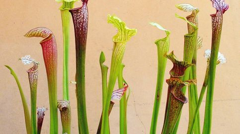 Las plantas carnívoras toman Bogotá