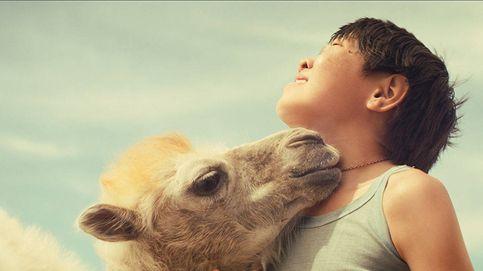 La enternecedora historia de 'Celestial Camel': el camello que llora