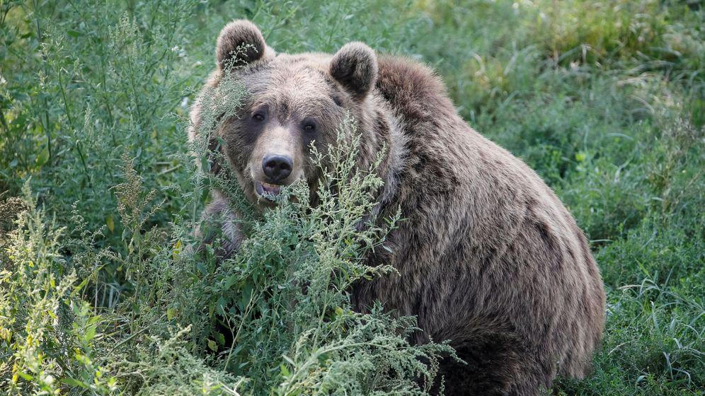 Foto: El oso, símbolo de las posiciones cortas en bolsa. (Foto: Reuters)