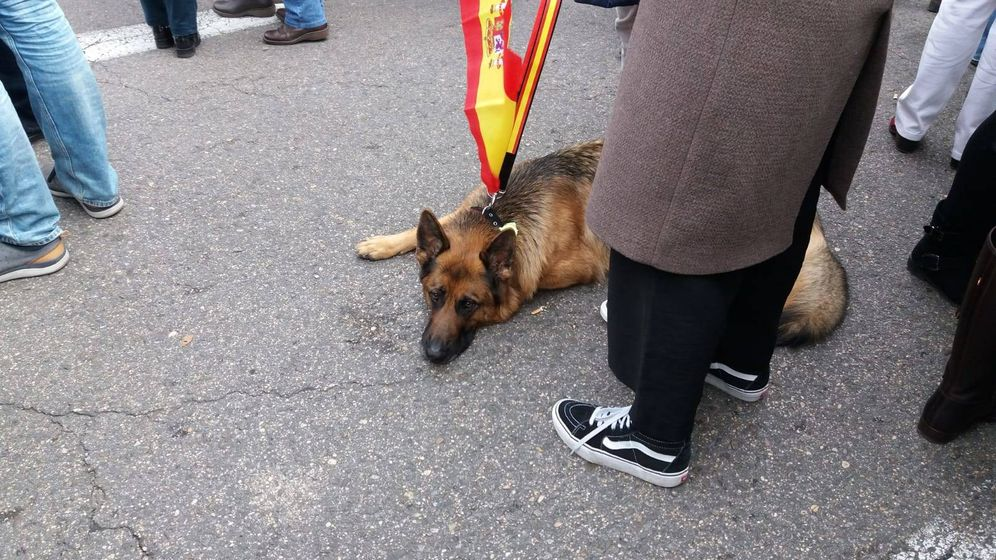 Foto:  Las mascotas también acuden a la manifestación por la unidad de España. (Á. C.)