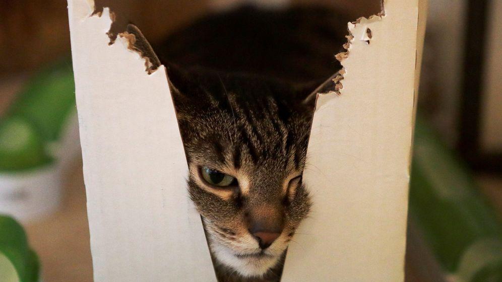 Foto: El gato de Schrödinger está vivo y muerto al mismo tiempo. (Reuters)