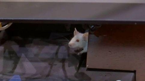 El Congreso de Colombia se llena de ratas
