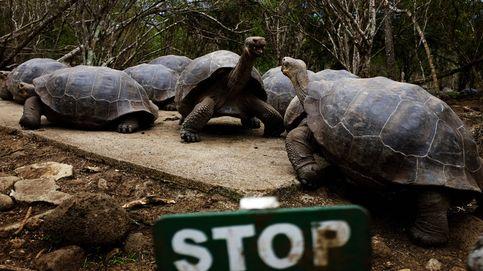 Las Islas Galápagos luchan contra un terrible y silencioso enemigo: el plástico