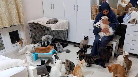 Una mujer vive con 480 gatos y 12 perros que le cuestan 6.500 euros al mes