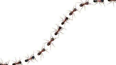 ¿Comer hormigas podría ayudarnos a vivir más?