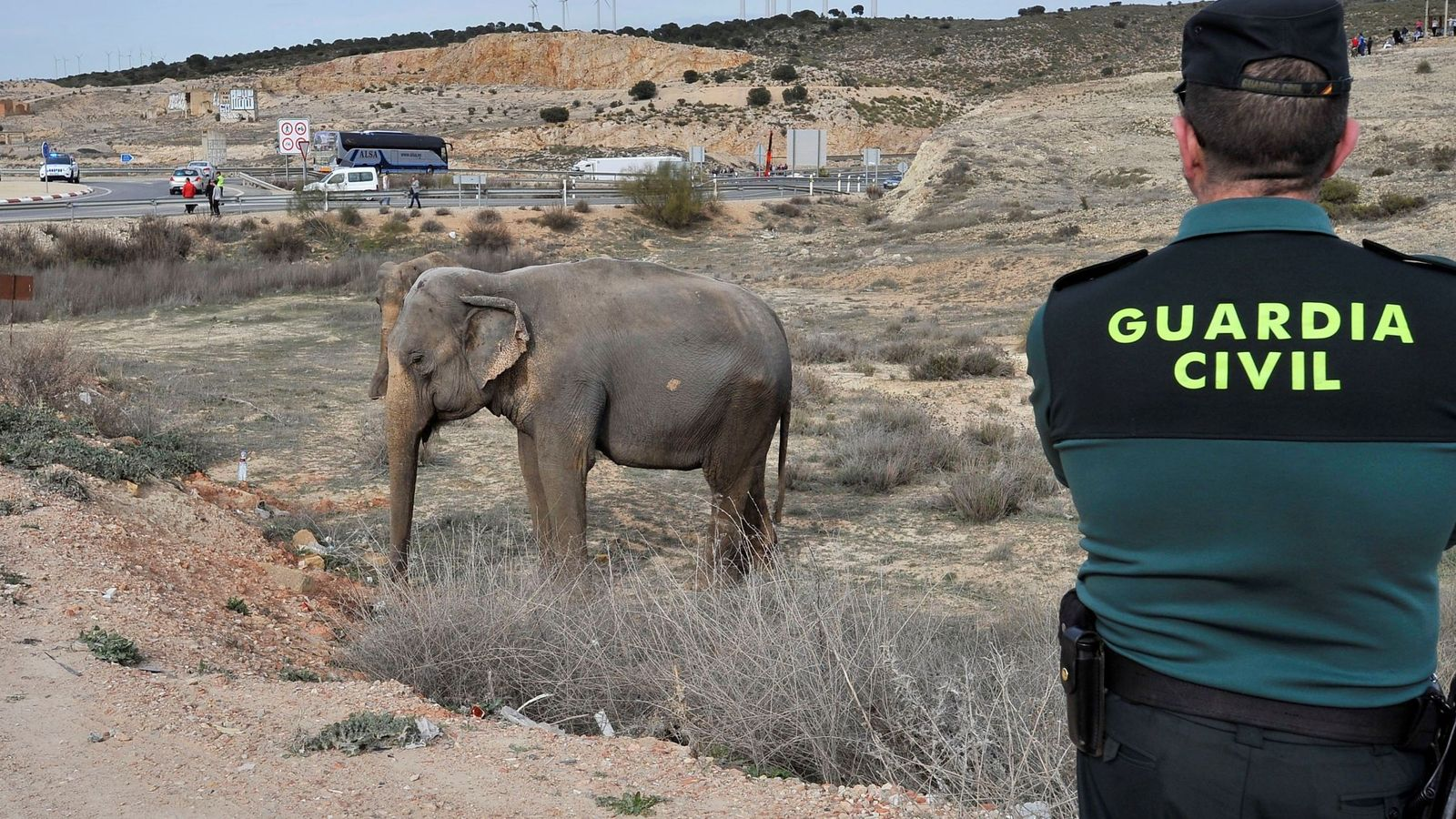 Foto: Un guardia civil vigila a uno de los elefantes que resultó herido tras volcar el camión en Pozo Cañada, en Albacete. (EFE)