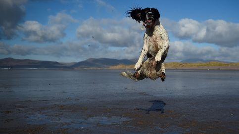 Las fotos de animales más enternecedoras (y crueles) del año