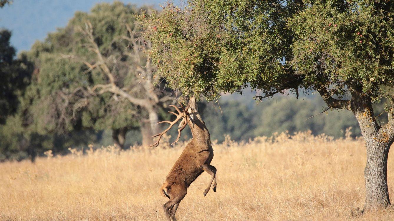 El Congreso rechaza la caza en los parques nacionales