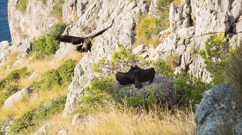 Los ecologistas exigen a Agricultura que proteja el paraíso de los March en Mallorca