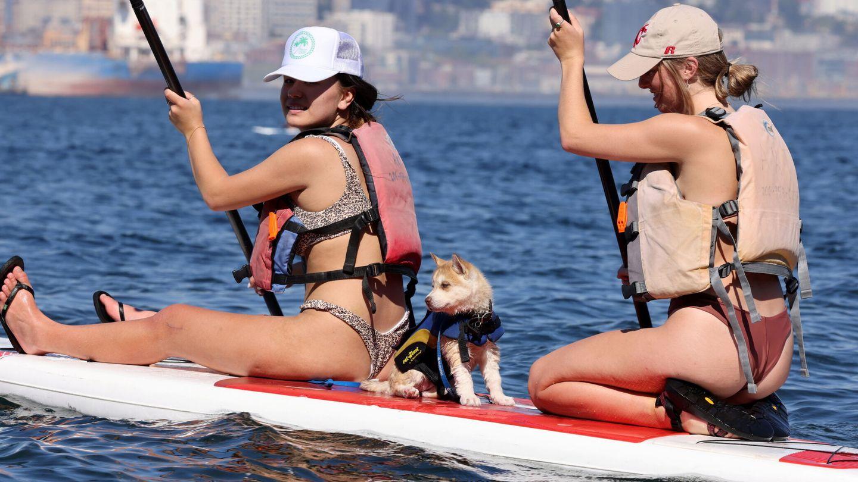 Muchos perros disfrutan de un día en la playa con sus dueños (Reuters/Karen Ducey)