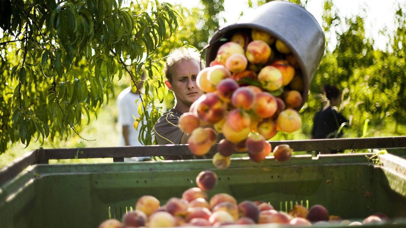 Foto: El excedente de producción también está detrás de los precios a la baja. (EFE)