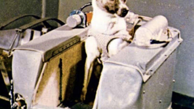 Laika, uno de los perros cosmonautas soviéticos (Youtube)