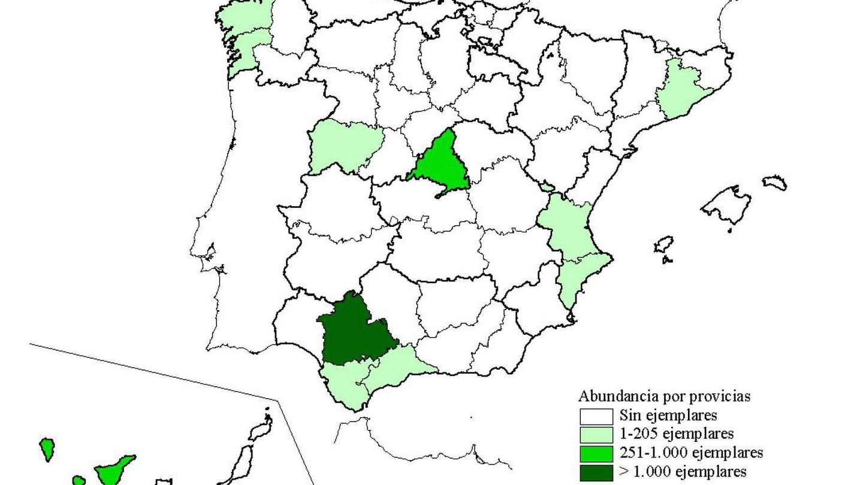 Presencia de la cotorra de Kramer en España. (SEO Birdlife)