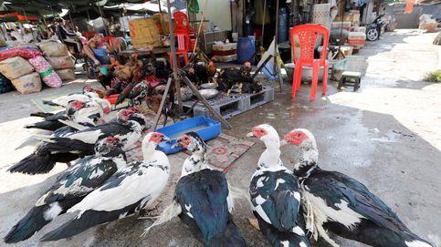 China registra un brote de gripe aviar cerca del foco del coronavirus