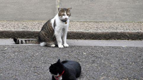 Scotland Yard resuelve el caso del asesino de gatos después de 500 víctimas