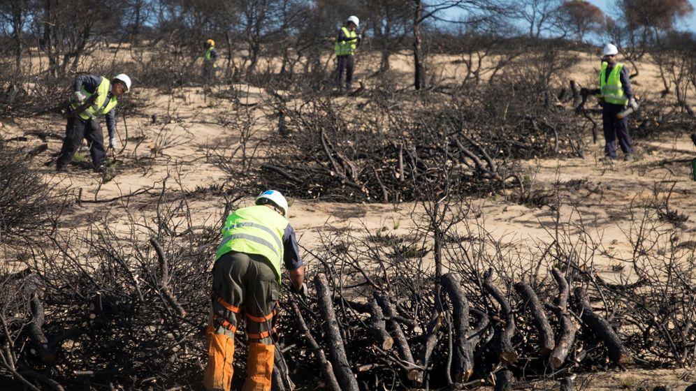 Foto: Trabajos reforestación en la zona afectada por el incendio de Moguer, verano de 2017 (EFE)