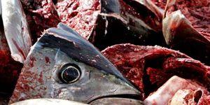 """Una alerta """"exagerada"""" provoca una caída del 30% en las ventas de atún y pez espada"""