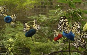 Un museo filipino expone cuadros realizados con bellas alas de mariposa