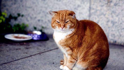Olly, el gato que acabó dirigiendo la vida de un aeropuerto británico