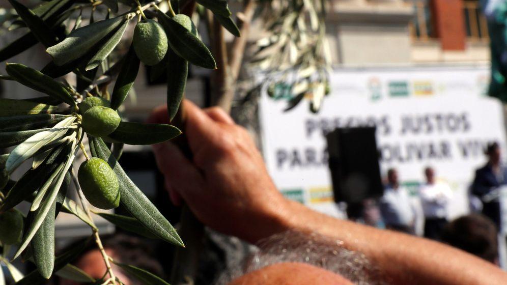 Foto: Un hombre sostiene una rama de olivo durante la manifestación bajo el lema Precios justos para un olivar vivo que se celebró este jueves en Madrid. (EFE)