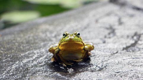 Las especies invasoras que ya han entrado en España
