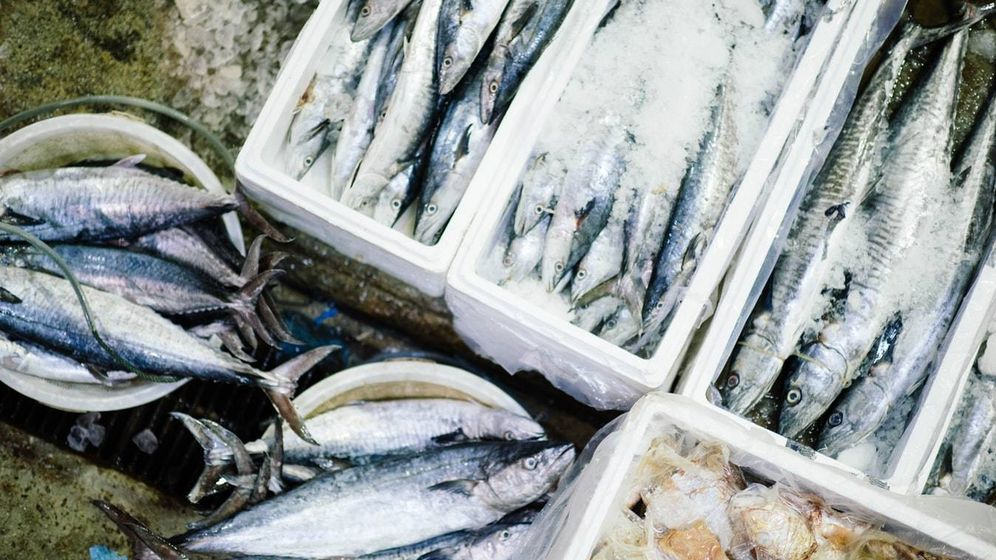 Foto: Los pescados que deben evitar las embarazadas y los niños. (Foto: Unsplash)