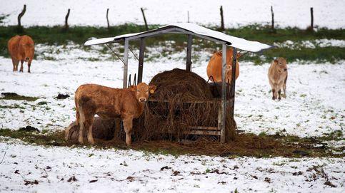 El día de Reyes anticipa una borrasca con nevadas y temperaturas mínimas