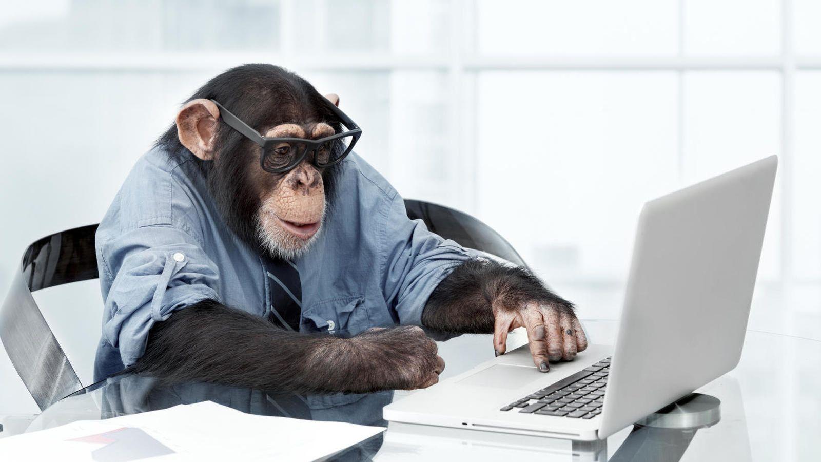 Foto: Los monos aciertan sus pronósticos tanto como los expertos